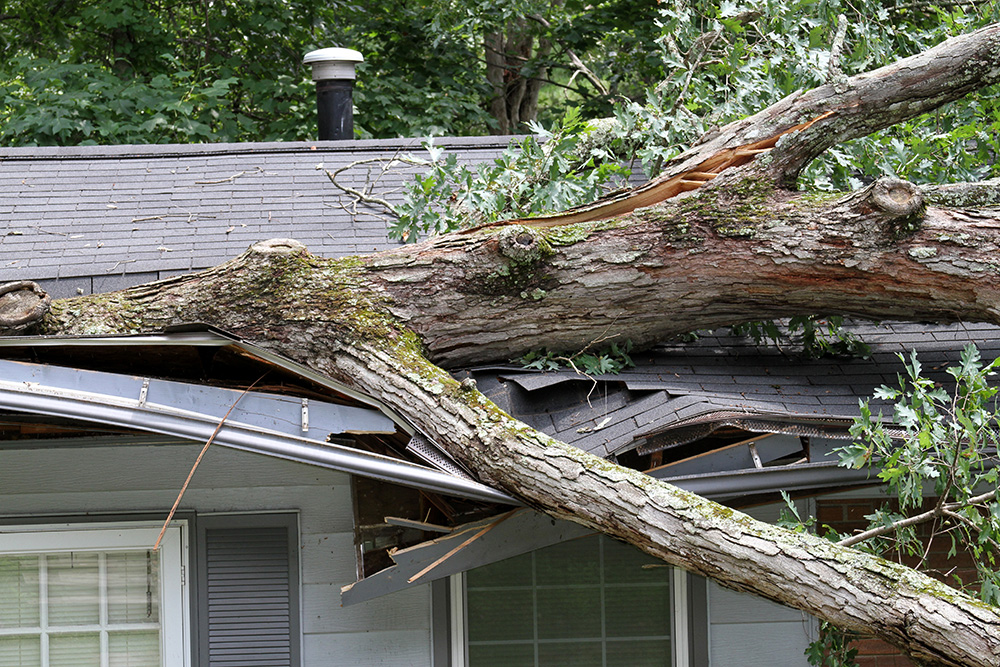 A large oak tree tossed by the winds of a summer storm falls onto and cuts through half of a house roof severely damaging it.